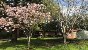 Cordelia House Care Home in Fareham - garden