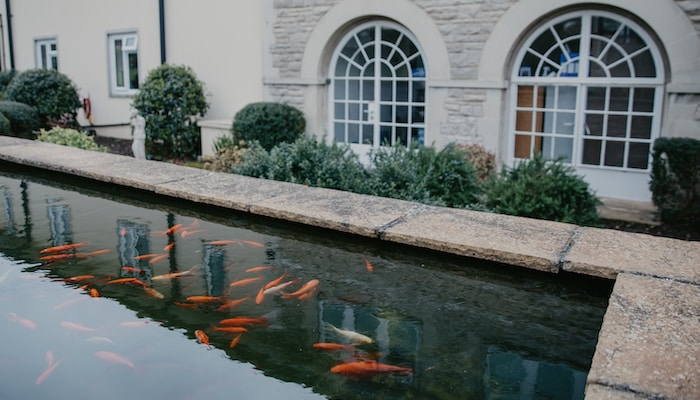 Fish pond at our Swanage care home