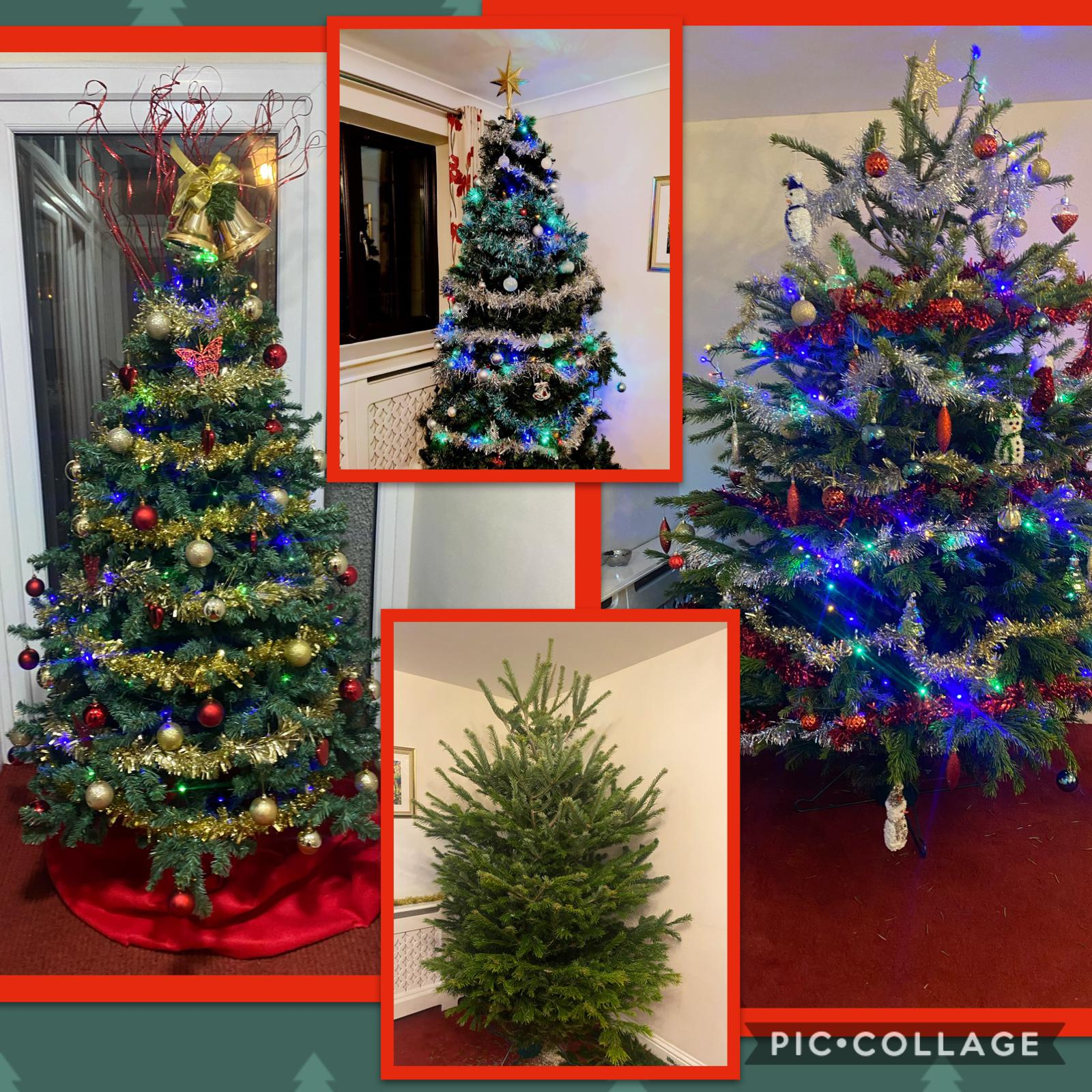 Christmas trees at Tilford Care and Nursing Home in Farnham